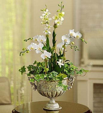 1.800.flowers: Luxurious Orchid Garden