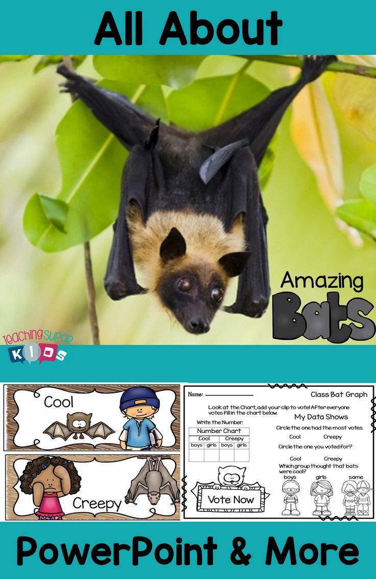 All about Bats Unit Study. If you are looking for an awesome unit on Bats this one  has it all. PowerPoint with full color photos and more!