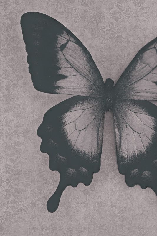Damask Butterfly - Abstract Black and White Photograph Print