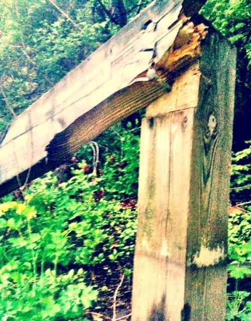 Wood post on the bikepath, Lexington, MA [Photo by C. Gates]