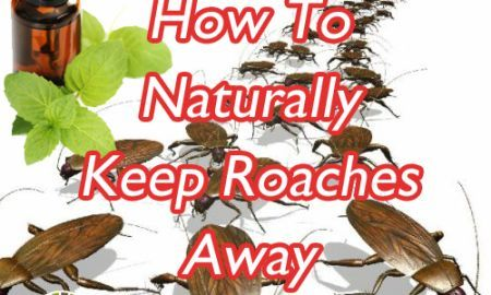 The most effective oils at repelling roaches are cypress oil and peppermint oil.