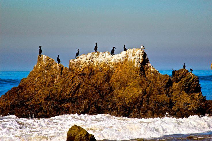 Rocky beach birds