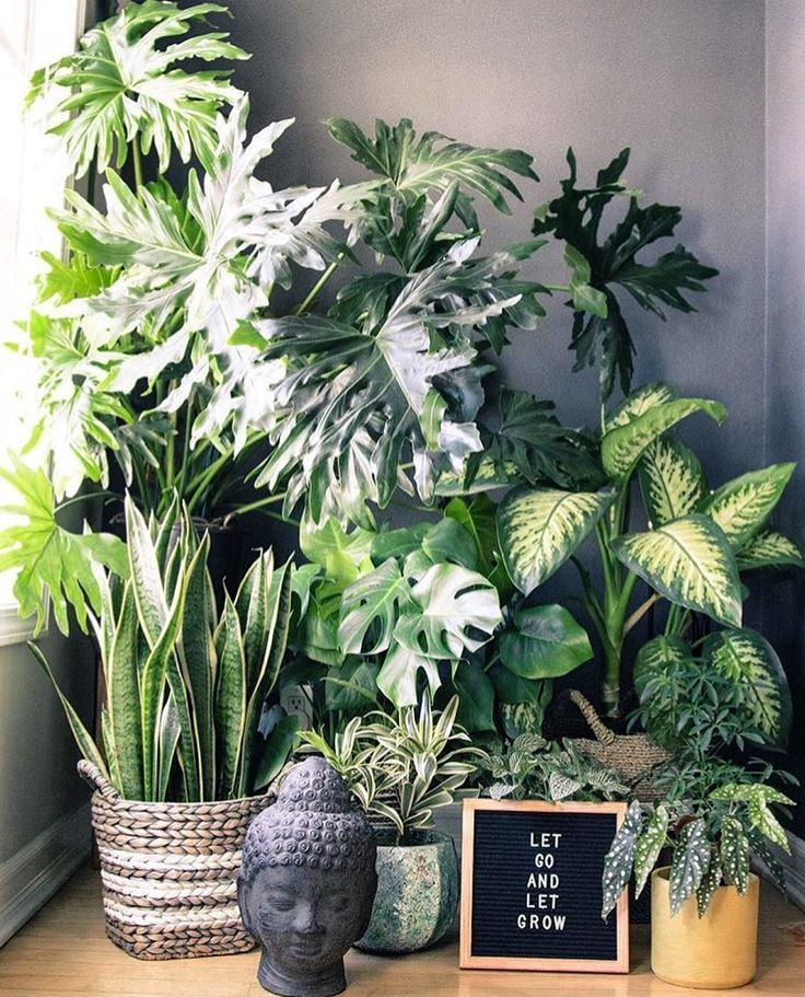 These are the plants that clean the air