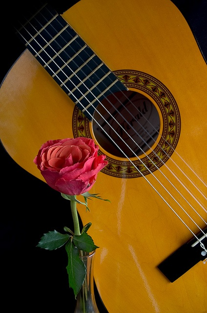 Roses In Garden: Pin By Alin Ajel On Guitar And Flowers