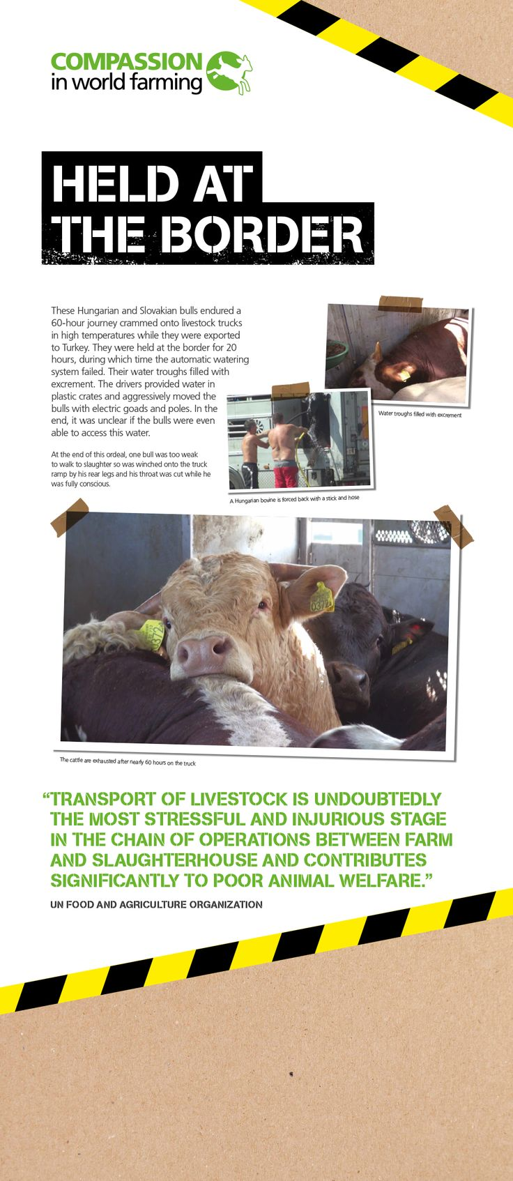 Compassion holds an exhibition at the European Parliament and shows MEPs why #liveexports must be stopped.