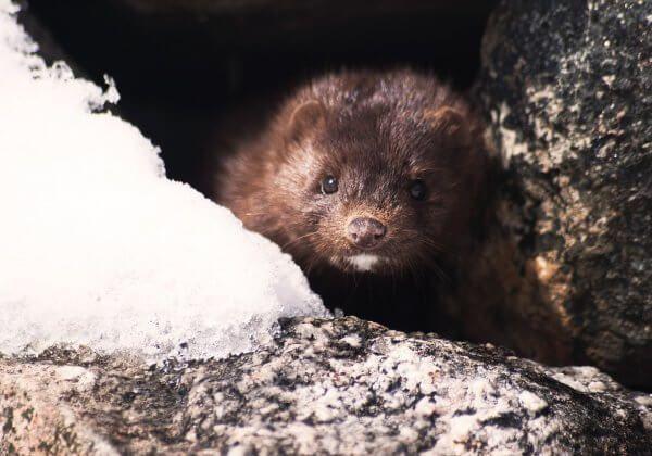 GREAT NEWS: Japan's Last Fur Farm Just Closed!