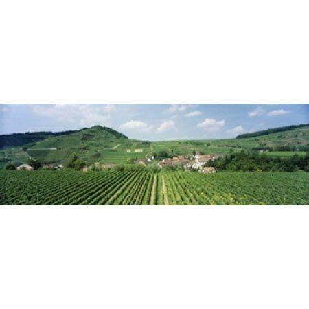 Vineyards near a village Oberbergen Der Vogelsangpass Bereich Kaiserstuhl Baden-Wurttemberg Germany Canvas Art - Panoramic Images (36 x 12)