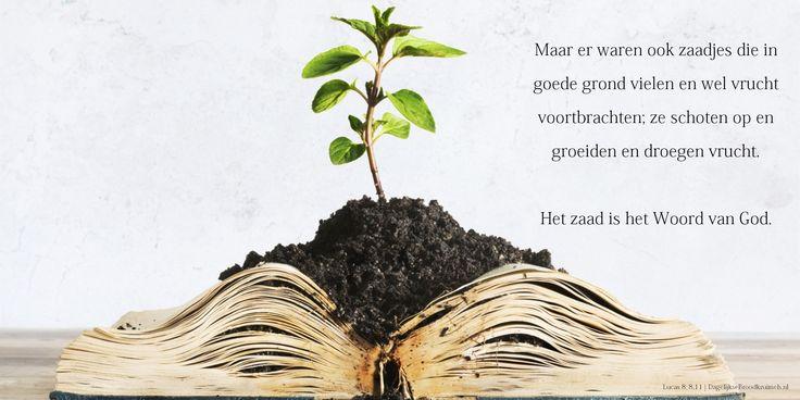 Maar er waren ook zaadjes die in goede grond vielen en wel vrucht voortbrachten; ze schoten op en groeiden en droegen vrucht. Het zaad is het Woord van God. Lucas 8:8,11  #God, #HetWoord  http://www.dagelijksebroodkruimels.nl/lucas-8-8-11/