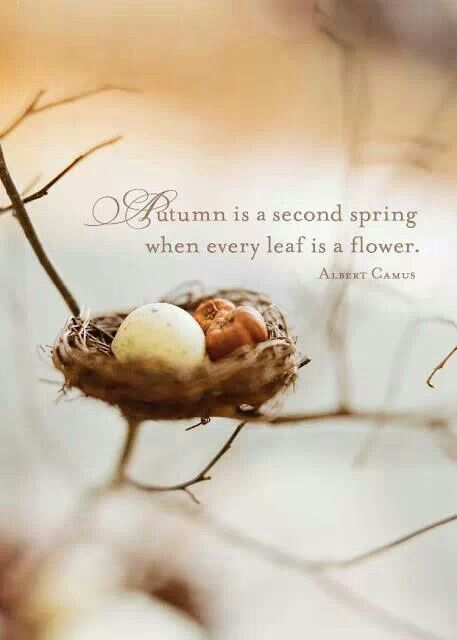 Autumn is a second spring when every leaf is a flower. [Albert Camus]