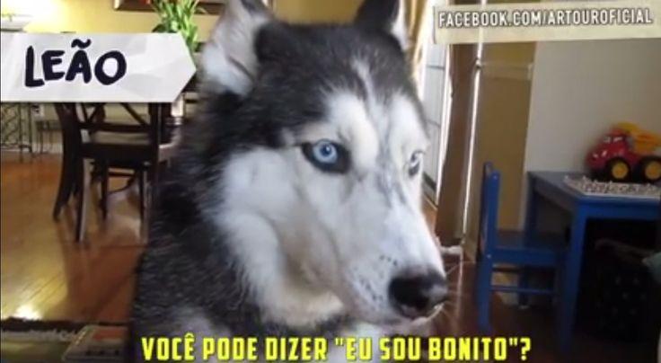 A página de vídeos Ar Tour publicou no último domingo, dia 4, uma montagem com 12 cachorros que interpretam cada signo.