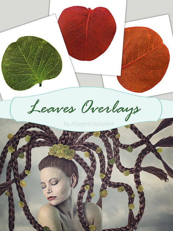 Leaves Overlays, Falling Leaves, Fall leaves, realistic, green, red,orange leaf,natural look, transparent background,scrapbooking, PNG, PSD