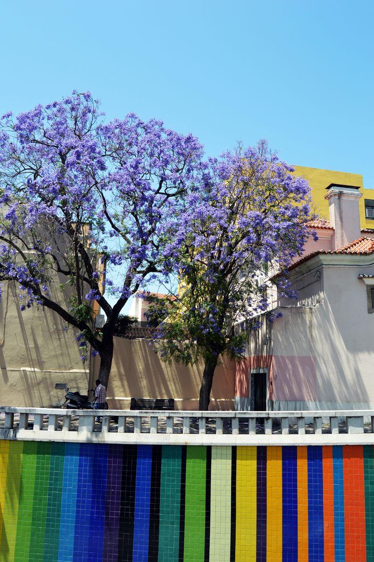 """""""Color Table"""" - Lisbon Tiles"""