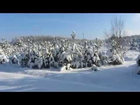 Вот и выпал снег