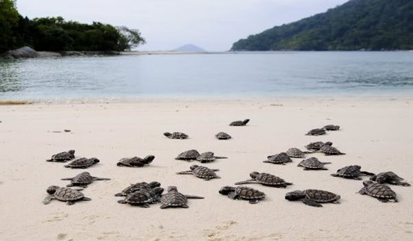 Someday, I want to visit you...turtles in Anambas islands