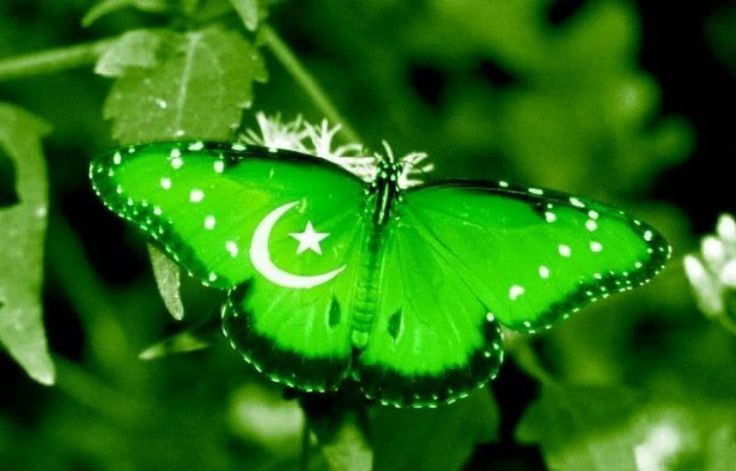 Flag of Pakistan Photos & Country Profile