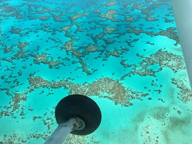 Arlington reef is a complex on the Great Barrier Reef which contains the popular spots Michaelmas and Upolu Cays. The area is located 90 minutes away from Cairns.  With its protected location, the water here is shallow and often calm. Maximum depth is at 18m/59.05 ft. Visibility is usually in the range of 10m/32.81 to 20m/65.62m. These ideal conditions make the area a perfect spot for beginner snorkelers.