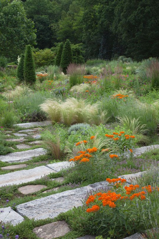 Aesclepias tuberosa, butterfly weed and grasses, Nasella tenuissima and Calamagrostis x acutiflora 'Karl Foerster' weaving through the sunsteps by the ruin at Chanticleer in Wayne, Pennsylvania