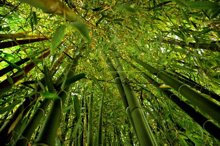 Good Morning from Casale del Gelso, bamboo