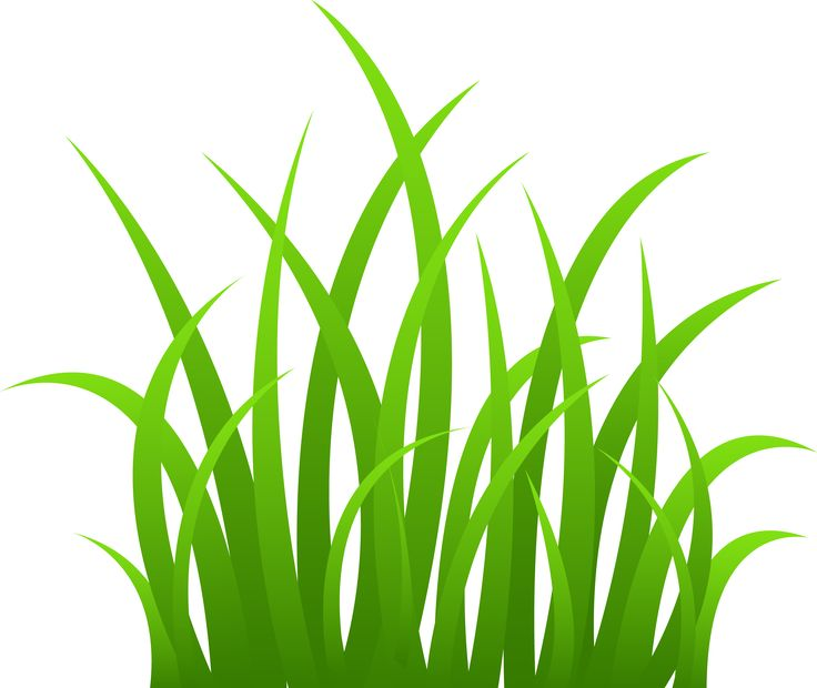 Grass border clip art google search work teaching for Tall border grass