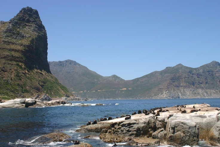 Seal Island, just off Hout Bay, Cape Peninsula