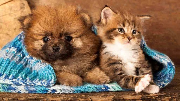 Pet insurance reviews and comparisons - Insurance - CHOICE