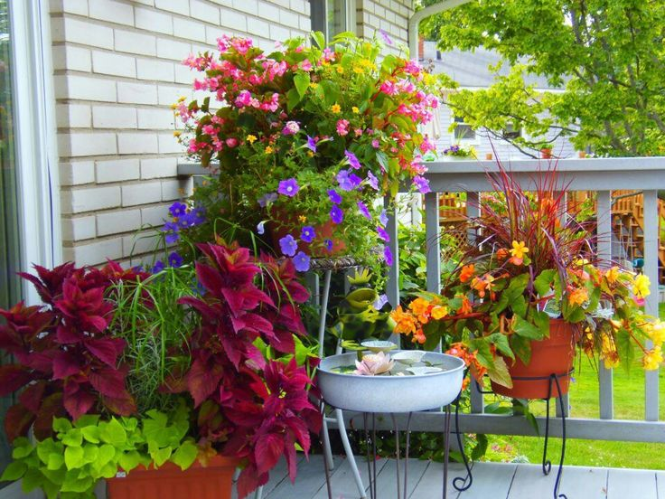 Container Gardens For Porch Front Ideas