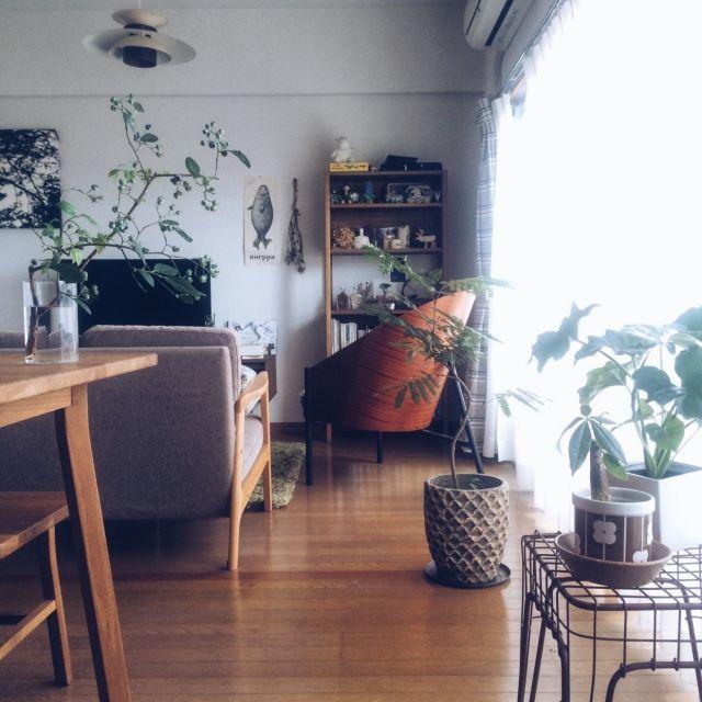 yurikissaさんの、部屋全体,IKEA,レトロ,北欧,3Coins,marimekko,北欧インテリア,momo natural,無垢テーブル,観葉植物のある部屋,ブルーベリー,賃貸マンション,ていねいに暮らしたい,緑のある暮らし,のお部屋写真