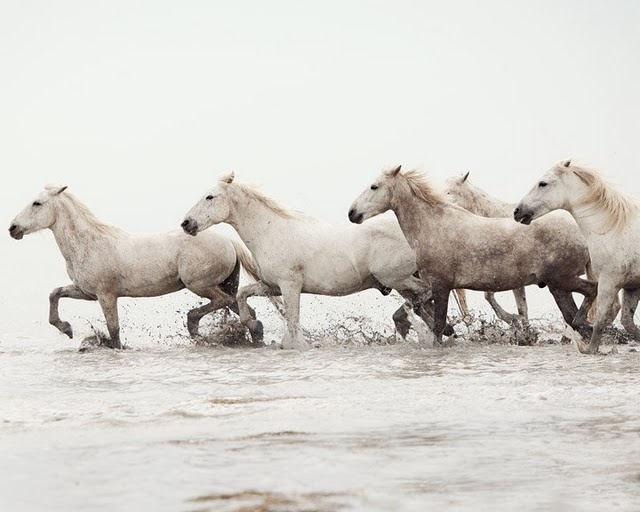 To photograph wild horses running....