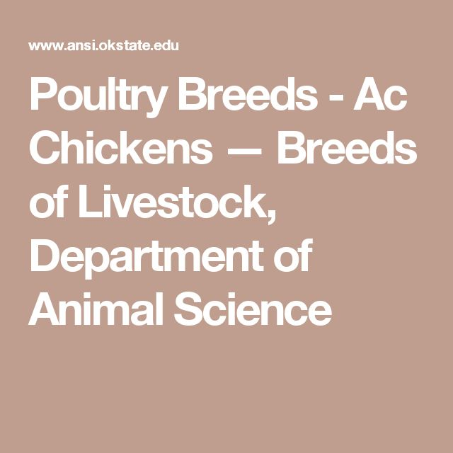 Poultry Breeds - Ac Chickens — Breeds of Livestock, Department of Animal Science