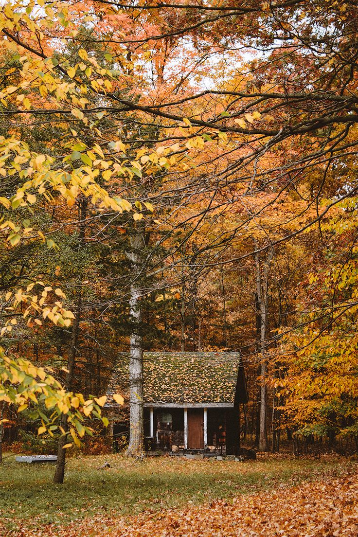 Fall Foliage Dream:  I'm convinced there's no better fall foliage on earth than in the Catskills. Not only is it my favorite time of year but it also makes each humble abode pop against the bright orange and yellow backdrop. I'd probably drop everything I'm doing to live in this hut right now.