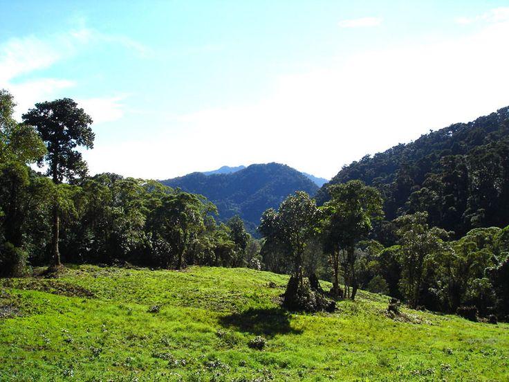 International National Parks | La Amistad International Park In Panama City