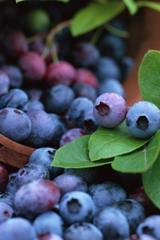 Close-up photo of blueberries. Love the colors and the how the line of berries leads your eye through the photo. |Food photography||Garden photography||Depth of field ideas||Nature photography|