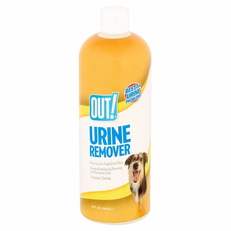 Dog Urine Smell Best 20+ Cat Urine Sme...
