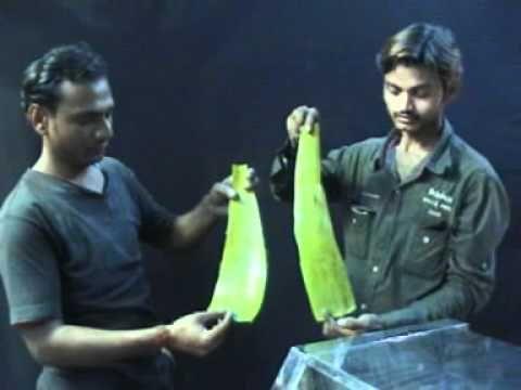 aloe vera leaf extractor www.omshaktifabricator.com