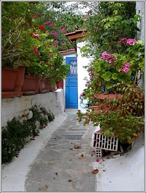 This is what Greece is like... riotous, exuberant, vibrant, luminous... just like this garden