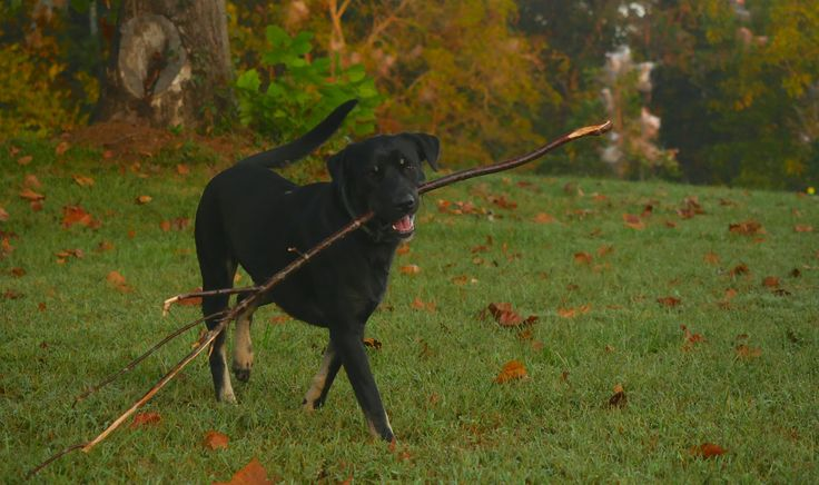 He can't get enough sticks and already found a new fav before sunrise today!