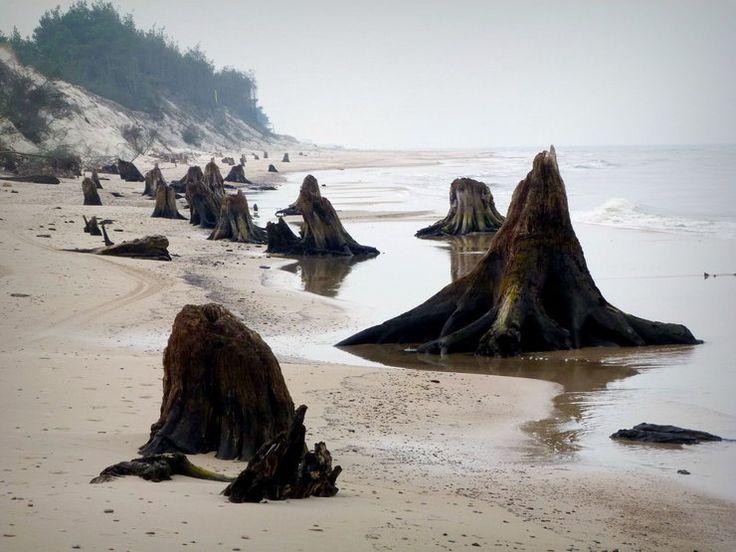 Zatopiony las koło Czołpina nad Bałtykiem - Poznaj Polskę