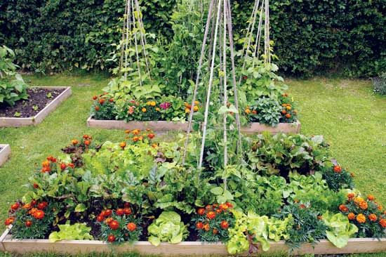 Intensive Gardening Grow More Food In Less Space With 400 x 300