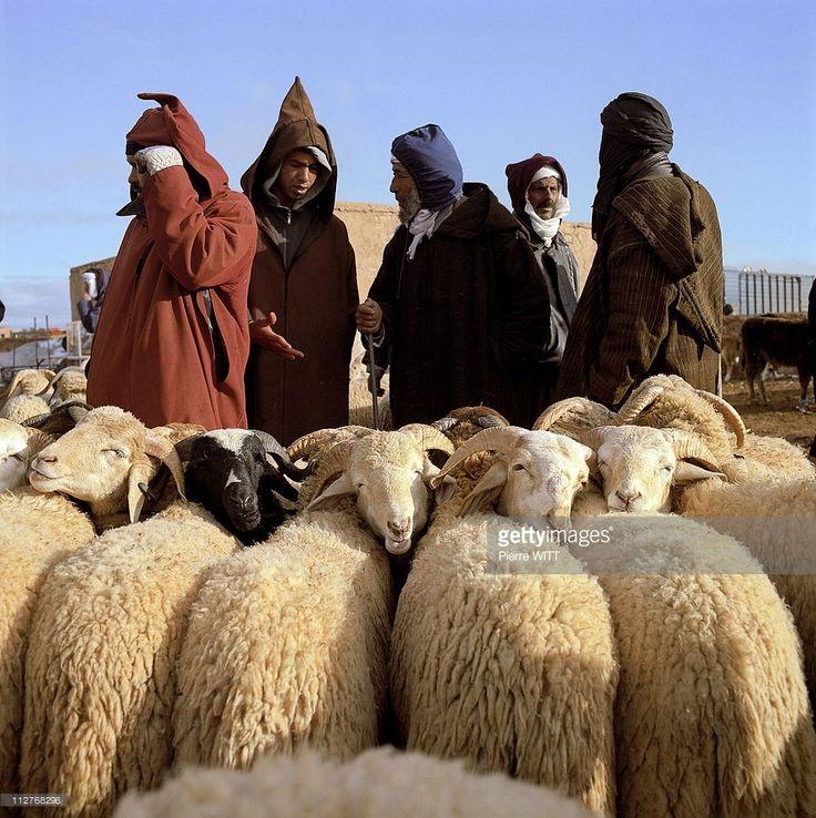 The souk of Tendrara, sheep market for Aid El Kebir fest Figuig district, Eastern Morocco on December, 2008.