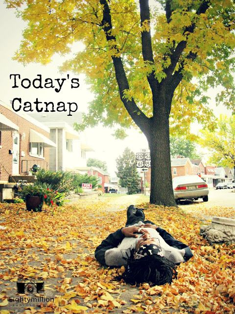 Today's Catnap - Eightymillion Photography - Blog Series - Dubuque, Iowa - photo project