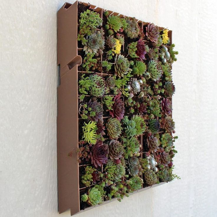 living wall planter best 25 outdoor wall planters ideas on 31079