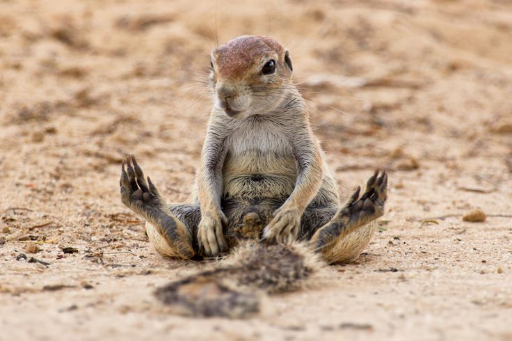 Africa    Just Chilling by Mario Moreno   Ground squirrel in Kgalagadi Transfontier Park. South Africa