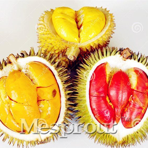 5pcs Red Durian Tree Seeds Delicious King Of Fruit Seeds High-nutrition Giant Outdoor Rare Plants Funny Bonsai Free Shipping
