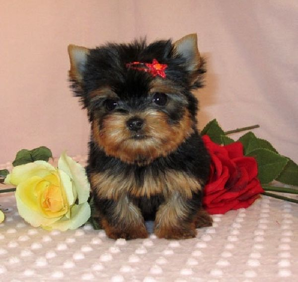 Someday I will have a dog…and this will be her.