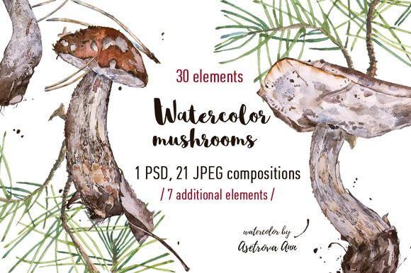 Watercolor  mushrooms by Asetrova Ann on @creativemarket