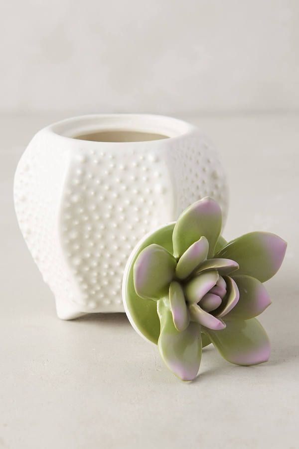 Love these succulent candles!
