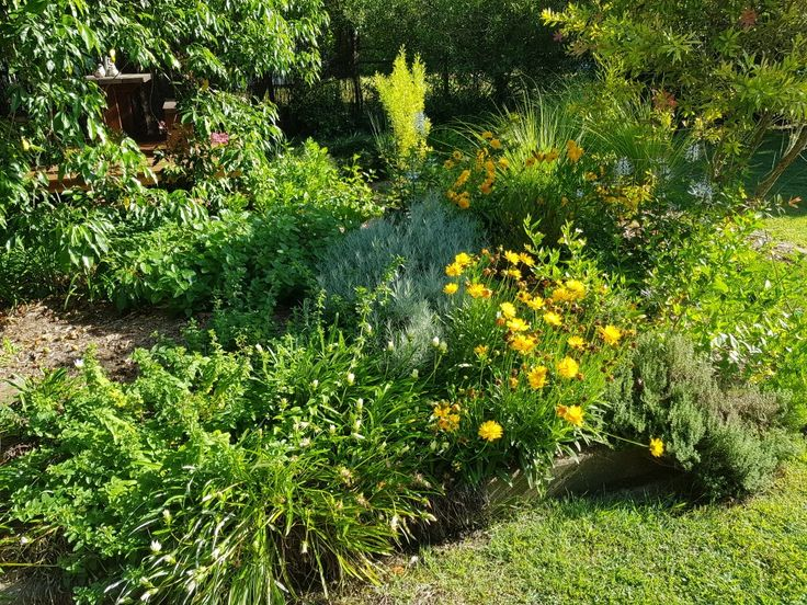 Jaliis is my own home based business.  I am a one woman team making up lotions as ordered and soaps can be as fresh as 4 weeks old or made to order with a 4 week turnaround. This is a photo of my families Australian Native & Herb garden in flower Summer 2017  Our garden has been given 'Habitat Gardens Partnership' status for having mostly Australian Native plants.  It's lovely hearing all the birds that fly into our garden each day to feed on the native pollen and take refuge