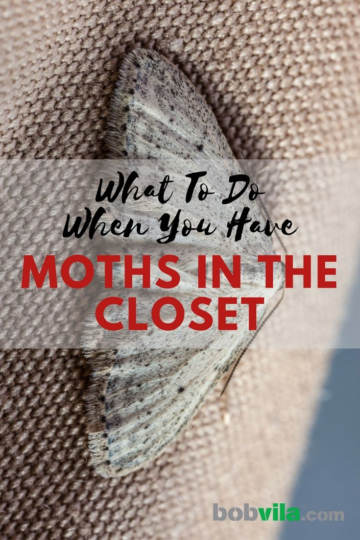 Solved What To Do When You Have Moths In The Closet Moths In Closet Moth Repellent Moth