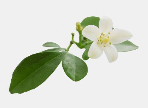 Plante aducatoare de noroc • Femeia