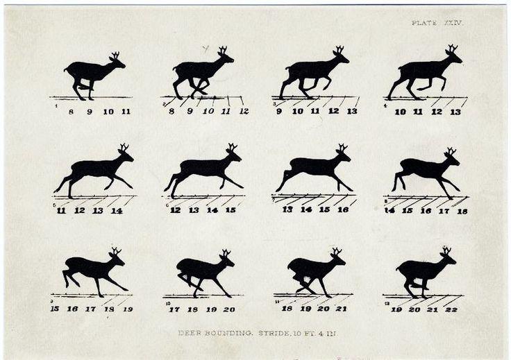 Animal - Locomotion - Deer